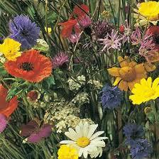 flores-silvestres3